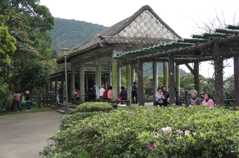 Cherry Blossoms at Yangmingshan National Park (2/6)